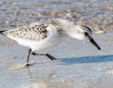 web-Trull-RR-bird-walk-by-Gerry-Beetham-3Sept2021-38
