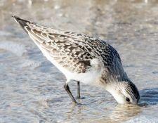 web-Trull-RR-bird-walk-by-Gerry-Beetham-3Sept2021-39