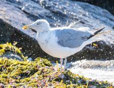 web-Trull-RR-bird-walk-by-Gerry-Beetham-3Sept2021-40