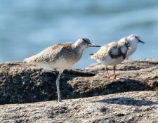 web-Trull-RR-bird-walk-by-Gerry-Beetham-3Sept2021-42