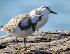 web-Trull-RR-bird-walk-by-Gerry-Beetham-3Sept2021-43