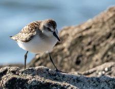 web-Trull-RR-bird-walk-by-Gerry-Beetham-3Sept2021-47