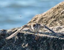web-Trull-RR-bird-walk-by-Gerry-Beetham-3Sept2021-48