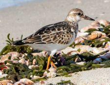 web-Trull-RR-bird-walk-by-Gerry-Beetham-3Sept2021-49