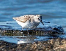 web-Trull-RR-bird-walk-by-Gerry-Beetham-3Sept2021-52