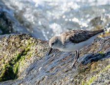 web-Trull-RR-bird-walk-by-Gerry-Beetham-3Sept2021-54