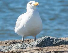web-Trull-RR-bird-walk-by-Gerry-Beetham-3Sept2021-55