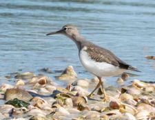web-Trull-RR-bird-walk-by-Gerry-Beetham-3Sept2021-58