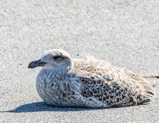 web-Trull-RR-bird-walk-by-Gerry-Beetham-3Sept2021-59