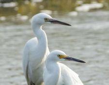 web-Trull-RR-bird-walk-by-Gerry-Beetham-7Aug202112
