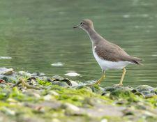 web-Trull-RR-bird-walk-by-Gerry-Beetham-7Aug202115