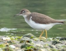 web-Trull-RR-bird-walk-by-Gerry-Beetham-7Aug202117