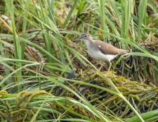 web-Trull-RR-bird-walk-by-Gerry-Beetham-7Aug202118