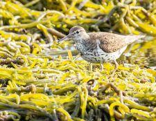 web-Trull-RR-bird-walk-by-Gerry-Beetham-7Aug202119