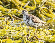 web-Trull-RR-bird-walk-by-Gerry-Beetham-7Aug202120
