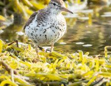 web-Trull-RR-bird-walk-by-Gerry-Beetham-7Aug202123