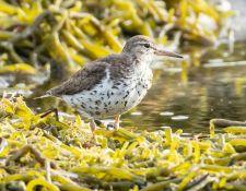 web-Trull-RR-bird-walk-by-Gerry-Beetham-7Aug202124