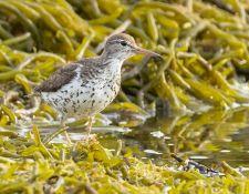 web-Trull-RR-bird-walk-by-Gerry-Beetham-7Aug202126