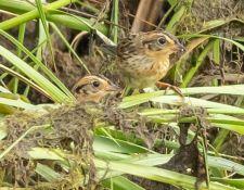 web-Trull-RR-bird-walk-by-Gerry-Beetham-7Aug202128