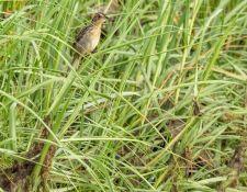 web-Trull-RR-bird-walk-by-Gerry-Beetham-7Aug202129