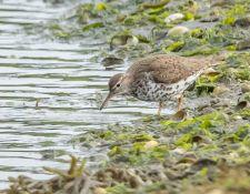web-Trull-RR-bird-walk-by-Gerry-Beetham-7Aug202131