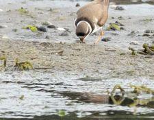web-Trull-RR-bird-walk-by-Gerry-Beetham-7Aug202132