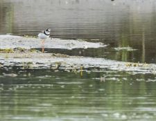 web-Trull-RR-bird-walk-by-Gerry-Beetham-7Aug202133