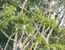 web-Trull-RR-bird-walk-by-Gerry-Beetham-7Aug202135