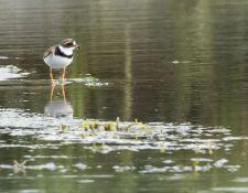 web-Trull-RR-bird-walk-by-Gerry-Beetham-7Aug202137