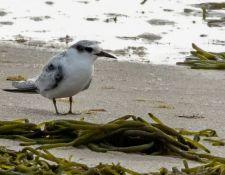 web-Trull-RR-bird-walk-by-Gerry-Beetham-7Aug202138