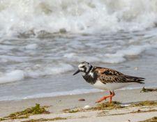 web-Trull-RR-bird-walk-by-Gerry-Beetham-7Aug202140