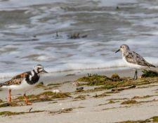 web-Trull-RR-bird-walk-by-Gerry-Beetham-7Aug202141