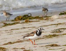 web-Trull-RR-bird-walk-by-Gerry-Beetham-7Aug202142