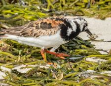 web-Trull-RR-bird-walk-by-Gerry-Beetham-7Aug202144