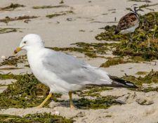 web-Trull-RR-bird-walk-by-Gerry-Beetham-7Aug202145