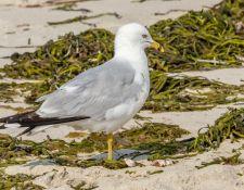 web-Trull-RR-bird-walk-by-Gerry-Beetham-7Aug202146