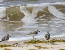 web-Trull-RR-bird-walk-by-Gerry-Beetham-7Aug202151