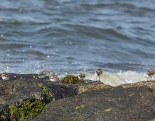 web-Trull-RR-bird-walk-by-Gerry-Beetham-7Aug202152