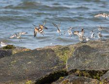 web-Trull-RR-bird-walk-by-Gerry-Beetham-7Aug202153