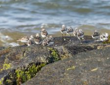 web-Trull-RR-bird-walk-by-Gerry-Beetham-7Aug202154