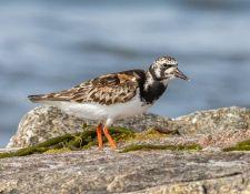 web-Trull-RR-bird-walk-by-Gerry-Beetham-7Aug202155