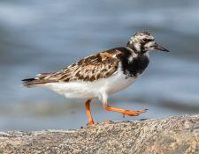 web-Trull-RR-bird-walk-by-Gerry-Beetham-7Aug202156