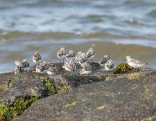 web-Trull-RR-bird-walk-by-Gerry-Beetham-7Aug202157