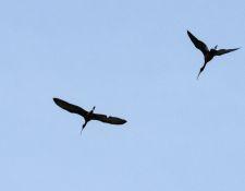 web-Trull-RR-bird-walk-by-Gerry-Beetham-7Aug202158