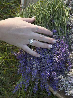 Lavender Farm by Stephanie Foster