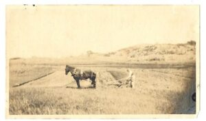 horse and plow