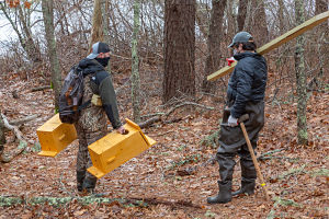 Jeremy and Tyler walk the wood duck boxes and post into Cornelius Pond Woodlands