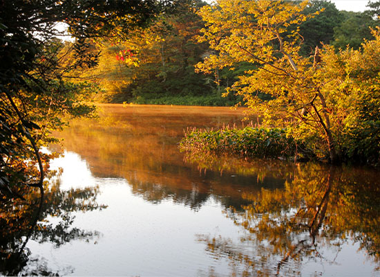 pond with fall foliage in background