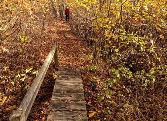 BRIDGE by ameriCorps_HCT_Coy Brooks Woodlands2 credit David Constance