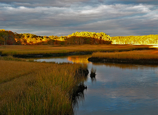 BellsNeck marsh by Stephanie Foster